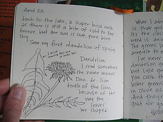 Dandelion journal entry