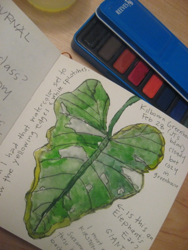 Kilbourn elephant ear watercolor