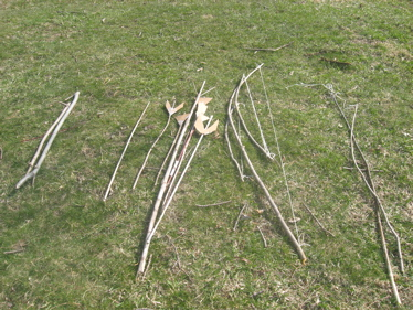Bow and arrows on lawn