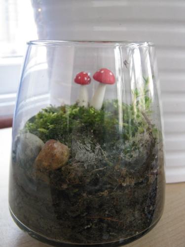 Terrarium with shrooms