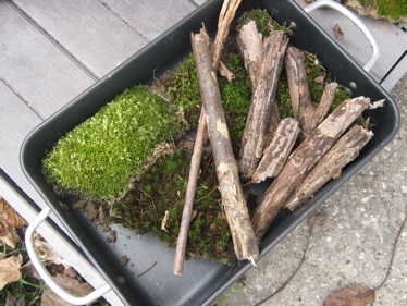 Moss and sticks