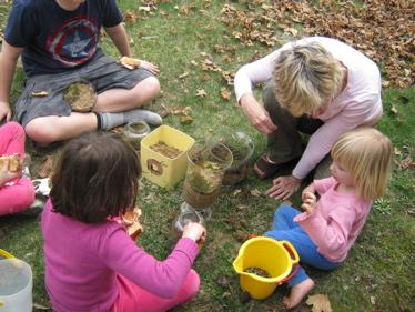 Making terrariums on grass