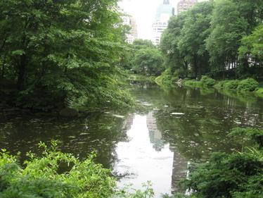 Central park lagoon