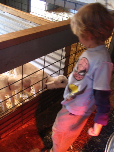 Sam_with_baby_goats