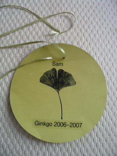 Ginkgo_badget