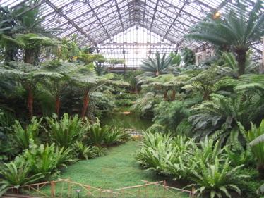 Fern_room_garfield_park_conservatory