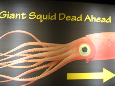 Florida_giant_squid