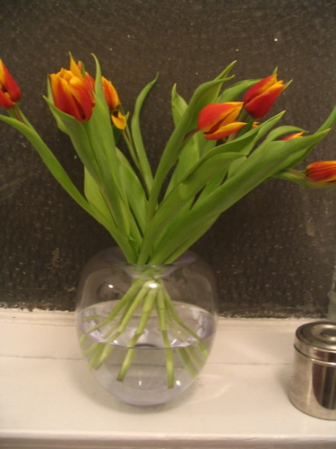 Tulips_from_heather